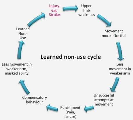 Diagram of the learned non-use cycle